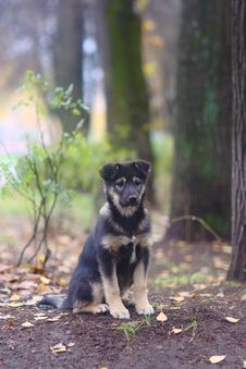 Free Puppy In The  Forest Stock Photo - 26989190