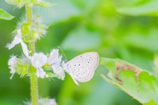 Free Small Butterfly Royalty Free Stock Photos - 26996808