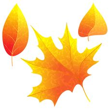 Free Bright Autumn Leaves. Royalty Free Stock Images - 26999669