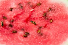Free Wasp On Melon Royalty Free Stock Photo - 271545