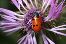 Free Bug On Flower Royalty Free Stock Photo - 272195