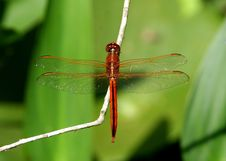 Free Dragonfly Stock Image - 272721