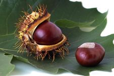 Free Two Chestnuts Over Leaf Stock Photography - 272932