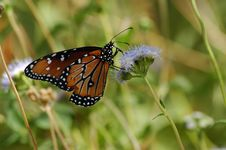 Free Butterfly Perched On Flower Stock Photography - 273062