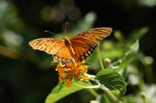 Free Butterfly Perched On Flower Stock Photos - 273063