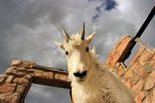 Free Young Mtn. Goat On Building At Mt. Evans Royalty Free Stock Photo - 273235