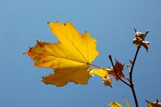 Free Yellow Over Blue Stock Photography - 275012