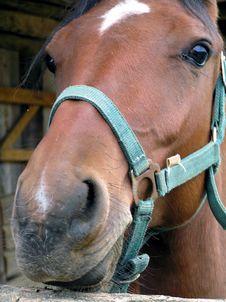Free Horse Stock Photos - 277903