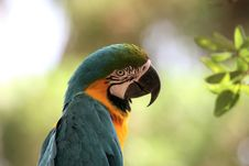 Free Parrot S Eye Royalty Free Stock Photography - 277967