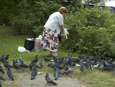 Lady Feeding Pigeons Stock Photos