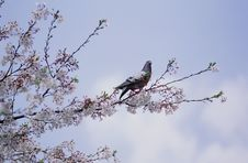 Free Birds Stock Image - 279771
