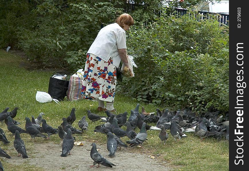 lady feeding pigeons