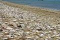 Free Pebbly Sandy Beach Royalty Free Stock Image - 2700876