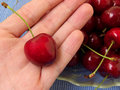 Free Cherries Stock Photo - 2702530