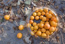 Free Tangerines In Autumn Stock Photos - 2701983