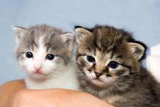 Free Two Kittens Royalty Free Stock Photos - 2703678