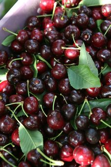 Free Cherries Stock Photography - 2705192