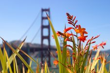 Free Flower And Bridge Stock Images - 2705624