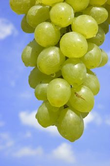 Free Grapes With Water Drops Royalty Free Stock Photos - 2706038