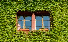 Free Green Window Royalty Free Stock Image - 2706046