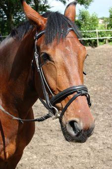 Free Horse Stock Image - 2707671