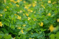 Yellow Weeds In Alley 4 Royalty Free Stock Photos
