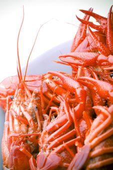 Free Boiled Crayfish In White Bowl Royalty Free Stock Photo - 2709175