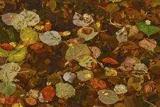 Free Colorful Autumn Leaves Background Royalty Free Stock Photos - 27000218