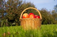 Free Basket Of Apples Royalty Free Stock Photography - 27002027