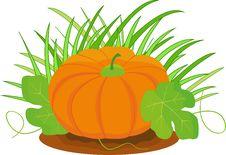 Free Pumpkin Royalty Free Stock Image - 27002046