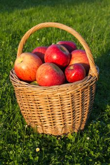 Free Basket Of Apples Royalty Free Stock Photo - 27002055