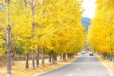 Free Autumnal Road Royalty Free Stock Photography - 27007077