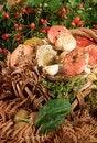 Free Basket With Mushrooms Stock Image - 27013791