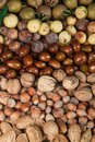 Free Autumn Fruits Stock Image - 27013801