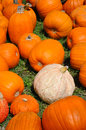 Free Pumpkin Patch Stock Images - 27016034