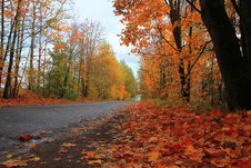 Autumn Forest, Russia Stock Photo