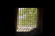 Trees Behind Bars Stock Images