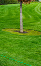 Free Tree And Grass Stock Photography - 27022922