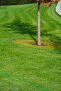 Free Tree And Grass Stock Photography - 27022932