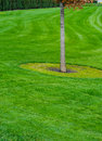 Free Tree And Grass Royalty Free Stock Photography - 27022937
