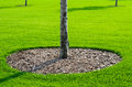 Free Tree And Grass Royalty Free Stock Images - 27023009