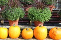 Free Orange Pumpkins And Hardy Mums Royalty Free Stock Image - 27028436