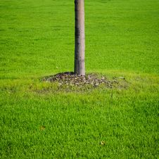 Free Tree And Grass Royalty Free Stock Photography - 27022857
