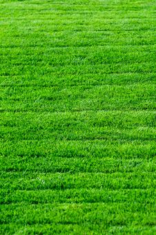Free Green Grass Texture Stock Photos - 27022953