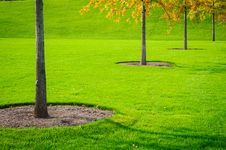 Free Trees And Grass Stock Photos - 27023003