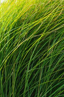 Free Green Grass Blades Background Stock Images - 27023054