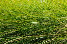 Free Green Grass Blades Background Royalty Free Stock Photography - 27023057