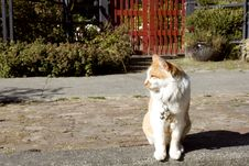 Friendly Cat In Front Of An Old House Stock Image