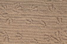 Free The Footprints In The Sand Royalty Free Stock Image - 27026186
