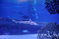 Free Underwater World Stock Image - 27034301